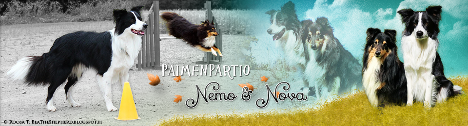 Paimenpartio Nemo & Nova